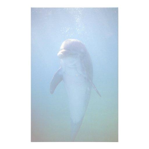 Delfín del bebé, acuario de La Habana del La, Cuba Papeleria De Diseño