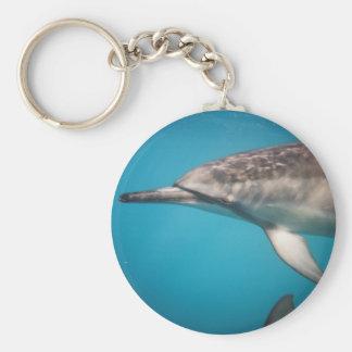 Delfín del hilandero llavero redondo tipo pin