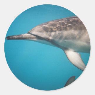 Delfín del hilandero pegatina redonda