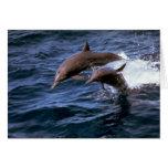 Delfín del hilandero tarjetas