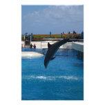 Delfín del salto papeleria de diseño