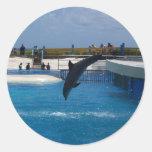 Delfín del salto pegatinas