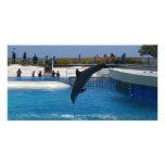 Delfín del salto tarjetas fotográficas personalizadas