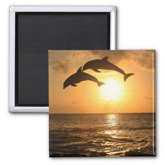 Delfin,Delphin,Grosser Tuemmler,Tursiops 2 Inch Square Magnet