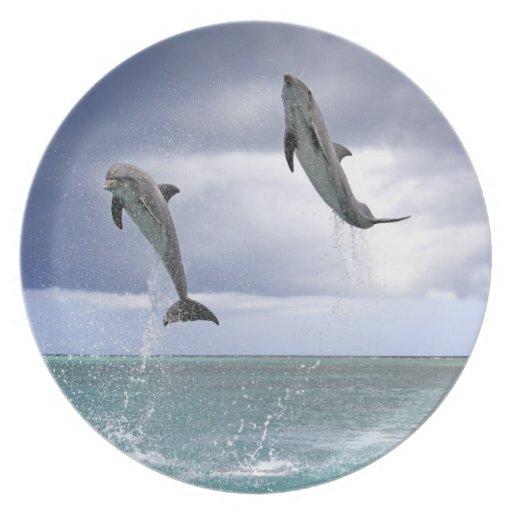 Delfin,Delphin,Grosser Tuemmler,Tursiops 2 Dinner Plate