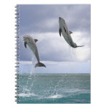 Delfin,Delphin,Grosser Tuemmler,Tursiops 2 Spiral Notebook