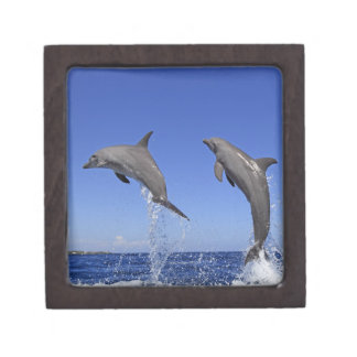 Delfin,Delphin,Grosser Tuemmler,Tursiops 3 Jewelry Box