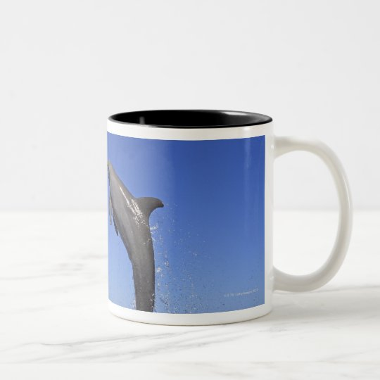 Delfin,Delphin,Grosser Tuemmler,Tursiops 3 Two-Tone Coffee Mug