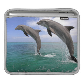 Delfin,Delphin,Grosser Tuemmler,Tursiops 4 iPad Sleeve