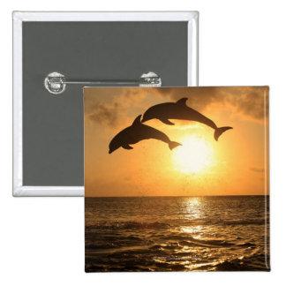 Delfin,Delphin,Grosser Tuemmler,Tursiops Pinback Button