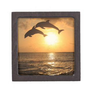 Delfin,Delphin,Grosser Tuemmler,Tursiops Keepsake Box