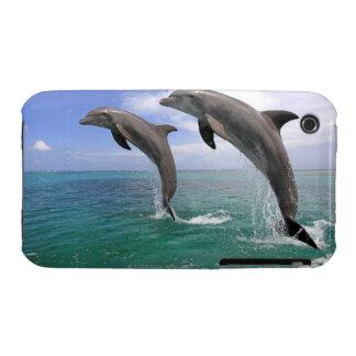 Delfin, Delphin, un Tuemmler más grueso, Tursiops iPhone 3 Cobertura
