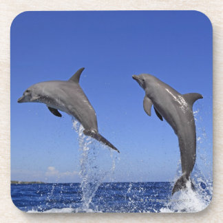 Delfin, Delphin, un Tuemmler más grueso, Tursiops  Posavasos