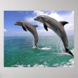 Delfin, Delphin, un Tuemmler más grueso, Tursiops  Póster
