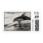 Delfín echado a un lado blanco pacífico envio