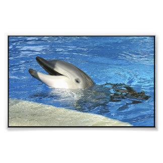 Delfín elegante impresion fotografica