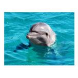 Delfín en foto del agua azul postal