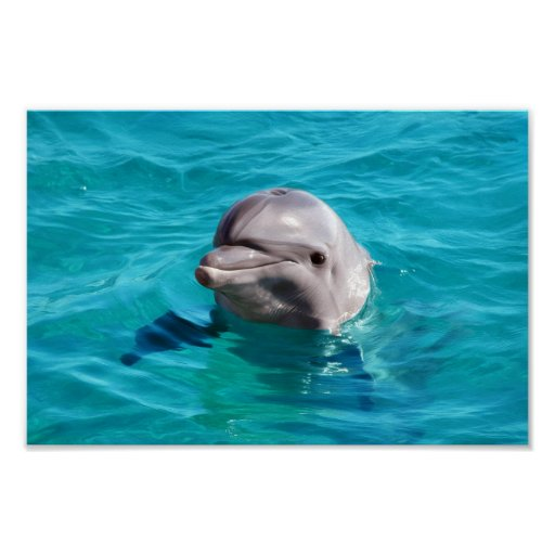 Delfín en foto del agua azul póster
