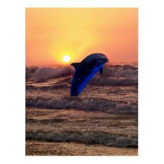 Delfín en la puesta del sol tarjetas postales