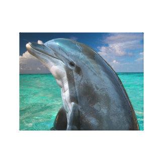 Delfín en las Bahamas Impresión En Tela