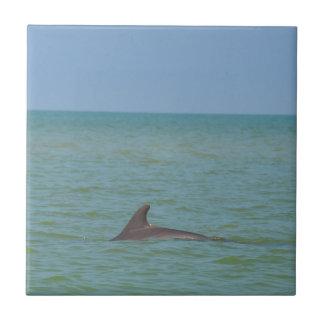 Delfín en Sanibel Azulejo Cuadrado Pequeño