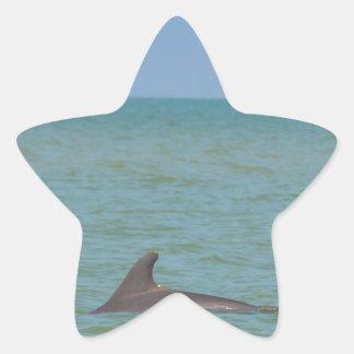 Delfín en Sanibel Pegatina En Forma De Estrella