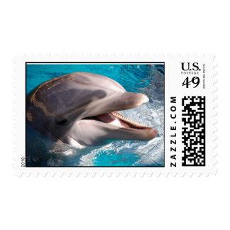 delfín estampilla