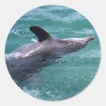Delfín Etiquetas