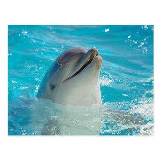Delfín feliz de la natación tarjetas postales