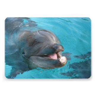 Delfín feliz comunicados personales
