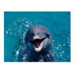 Delfín feliz postal