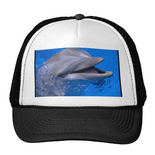 Delfín Gorra