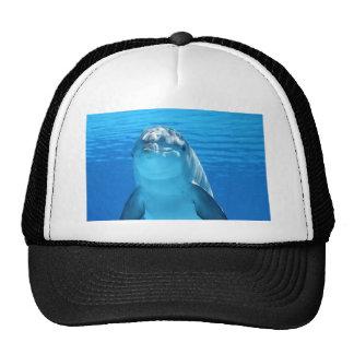 delfín gorro de camionero