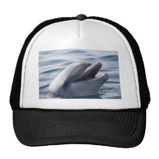 Delfín Gorros