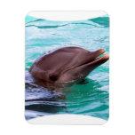 Delfín hablador imán