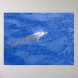 Delfín III Impresiones