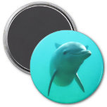Delfín Imán De Frigorífico