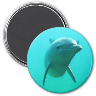 Delfín Imán Redondo 7 Cm