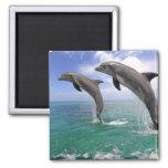 Delfin Imanes