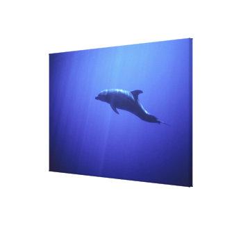 Delfín Impresión En Lienzo Estirada