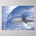 Delfín Impresiones