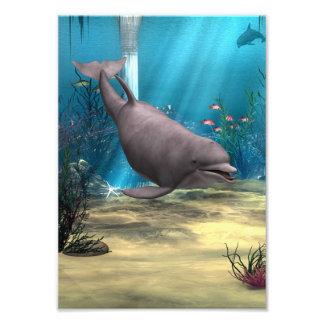 Delfín Impresión Fotográfica