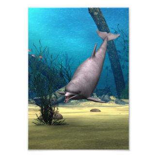 Delfín Fotografía
