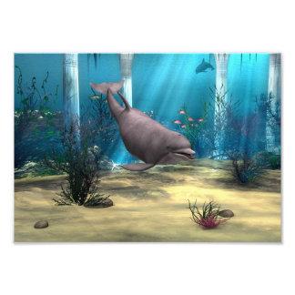 Delfín Fotografias