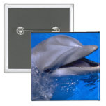 Delfín Pin