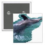 Delfín Pins