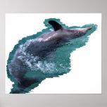 Delfín Posters