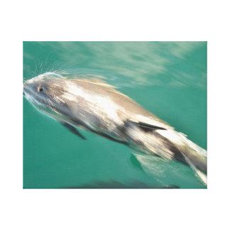 Delfín que apresura lona envuelta para galerías