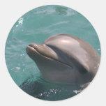 Delfín que hace muecas a los pegatinas pegatinas redondas