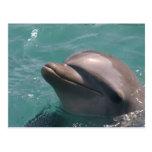 Delfín que hace muecas la postal